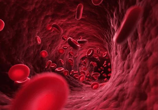 ما هو كم الدم الموجود فعليًا في جسم الإنسان؟