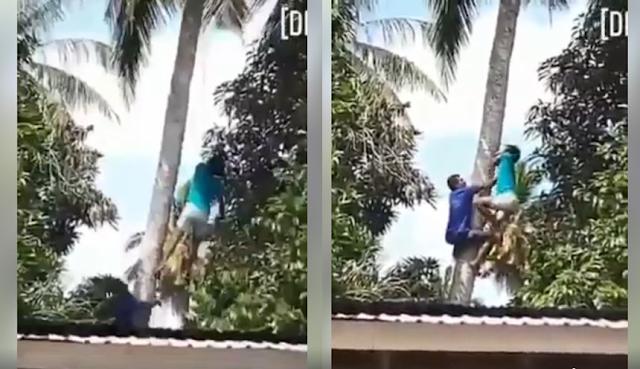 Turun Pohon Kelapa Dengan Tali, Tali Tersangkut Dileher Pria Ini Langsung Meninggal