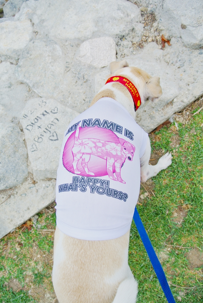 Custom Dog T-Shirt from HotDogCollars.com