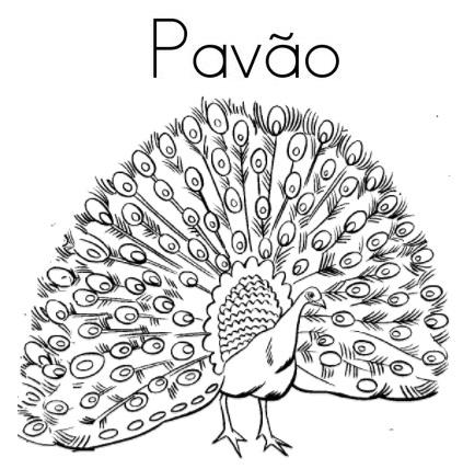 Blog De Geografia Pavao Desenho Para Imprimir E Colorir