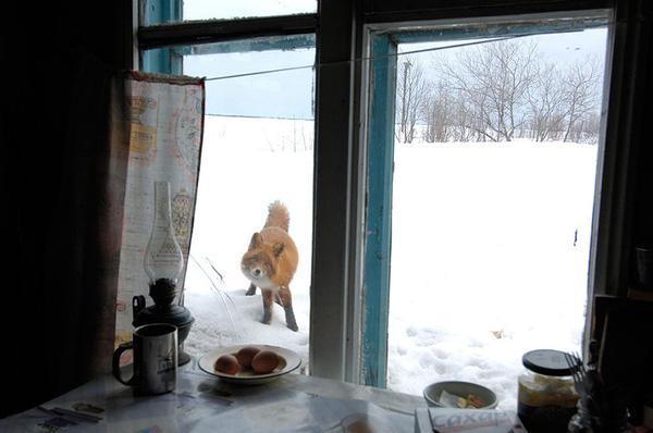 18 bức ảnh thú vị về những loài động vật bên cửa sổ