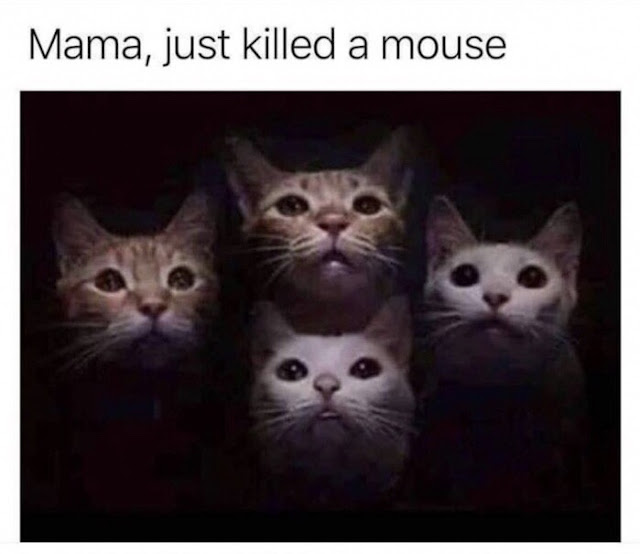 Funny Mama, I Just Killed A Mouse Cats Meme Picture