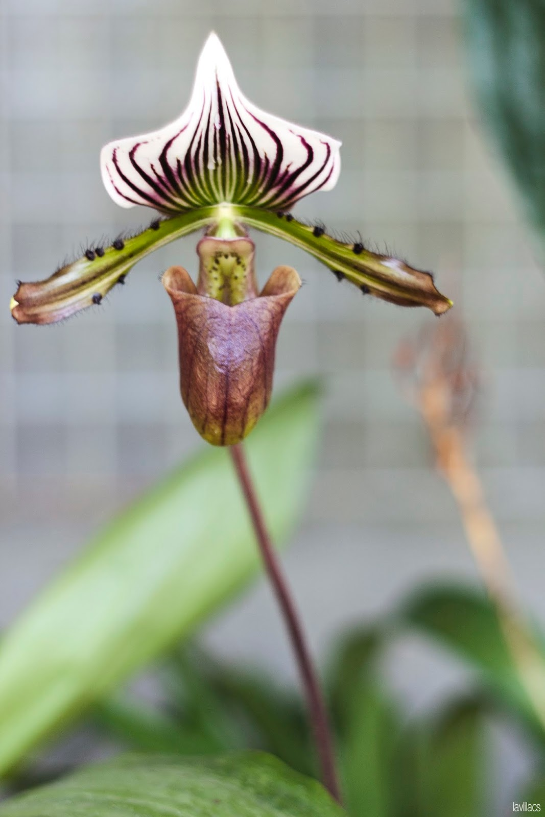Brooklyn Botanic Garden - Tiny Orchids