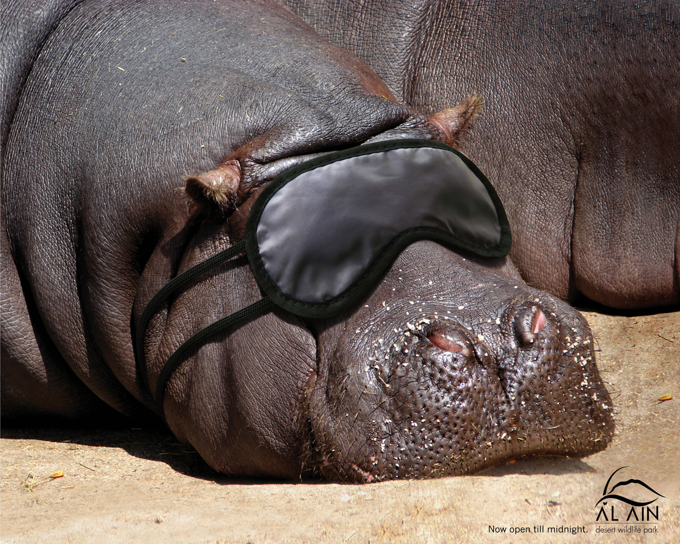 Funny+animals+ads+-+al+ain+desert+wildli