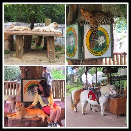 Baby Zoo Taman Safari Indonesia 2