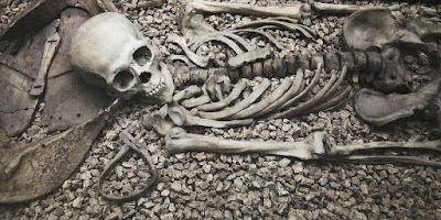 Bone weathering helps determine time of death