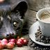 Kopi Luwak: Ο ακριβότερος καφές του κόσμου είναι ένας εφιάλτης για το ζώο που τον παράγει!