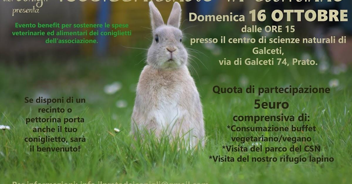 Evento - Rosicchiando in autunno con Il prato dei conigli onlus