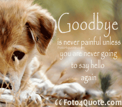 funny dog  Goodbye in never painful unless you are never going to say hello again.