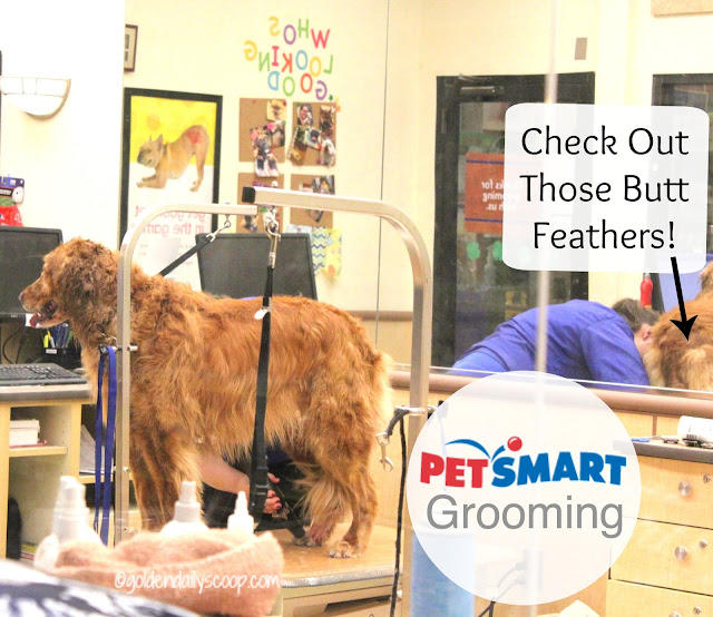 PetSmart, dog grooming, spring makeover, golden retriever