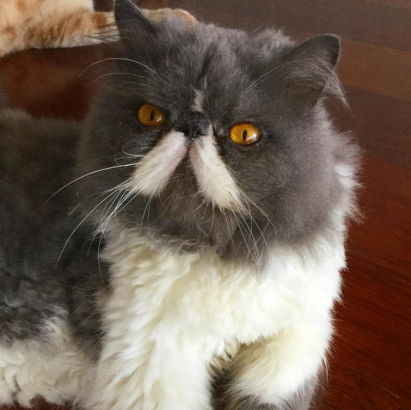 Napoleon, The Cat's Mustache Hipster
