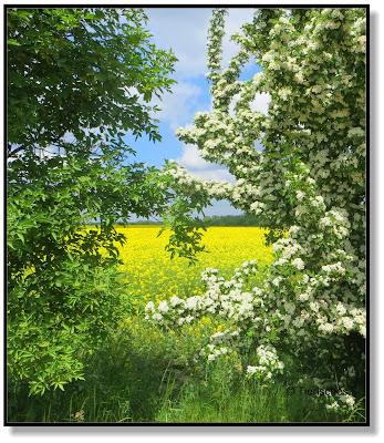 Landschaft mit blühenden Sträuchern