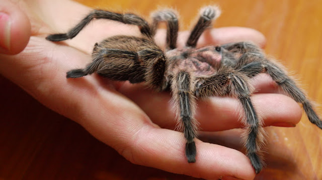 Turns Out, Spiders Have Tiny Paws, And It May Change The Way You Look At Them