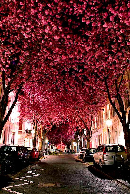 """10 Túneis """"vivos"""" de árvores e flores!"""