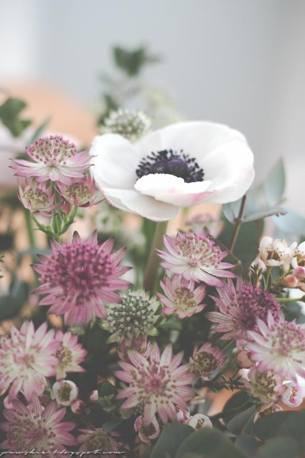 Ihana kukkanen anemone tähtiputki