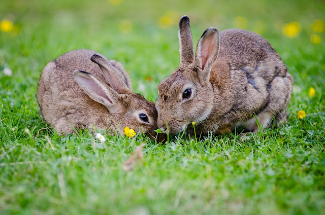Cute Rabbits Eating Grass at Daytime HD Wallpaper
