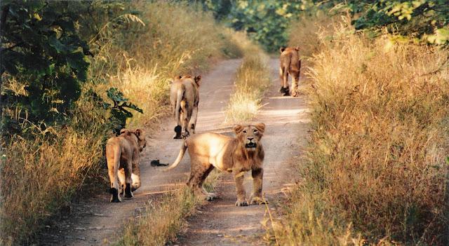 Gir Forest National Park