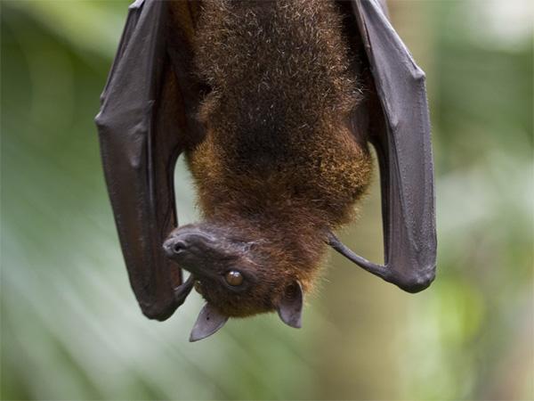 Kerala, Kasaragod, News, Bite, hospital, Discharged, Woodcutter, Bat, Trending, Bat bite woodcutter in kasargod