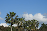 The tops of palm trees against a blue and white sky.