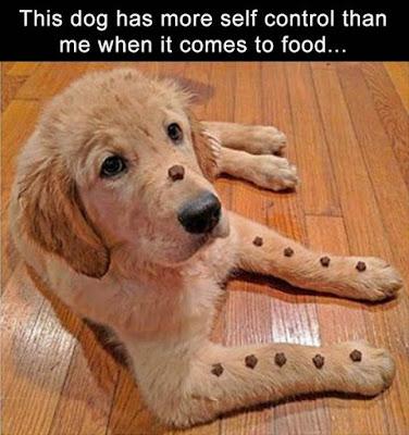 Self Control  #hikingwithdogs #adventuredog #campingwithdogs #dogsonadventures #optoutside #getoutdoors #happydogs