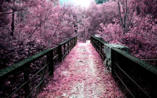 Nature Path Wallpaper Samsung Galaxy Tablets Wallpapers
