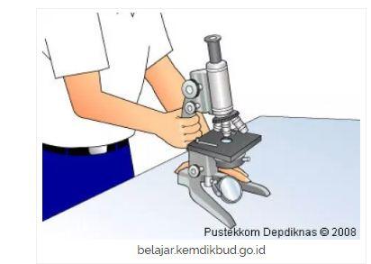 Pendidikan ipa mikroskop