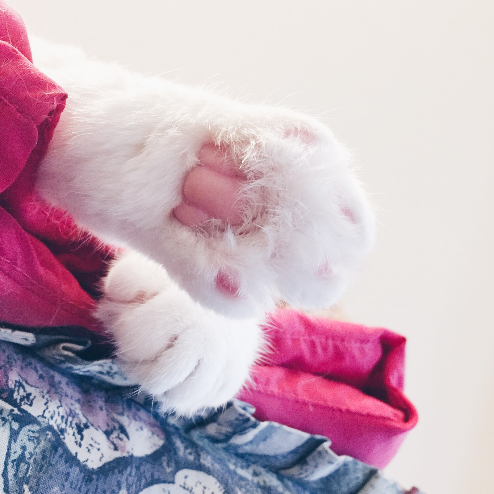cute cat paw