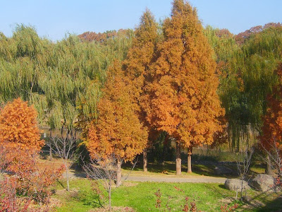 大阪府枚方市・山田池公園の紅葉