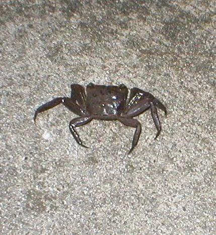 MacQue : Georgia Wildlife