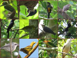 Birds at Dandeli