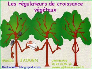Cours de physiologie végétal