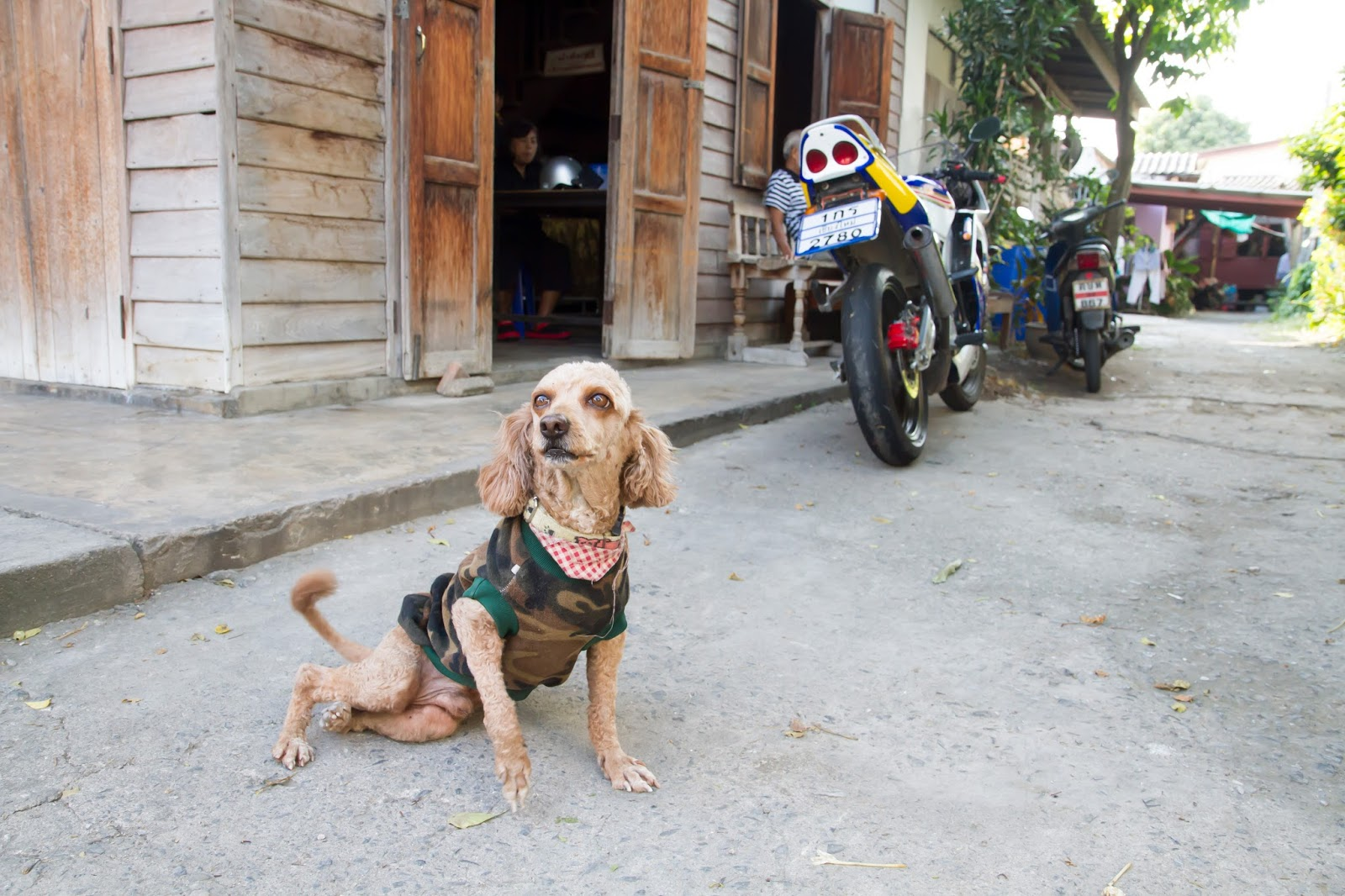 injured dog in the backstreets of Chiang Mai's old town