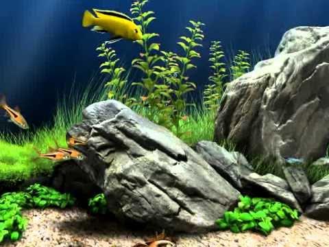 Dream aquarium screensaver screensaver savedownloads - Dream aquarium virtual fishtank 1 ...