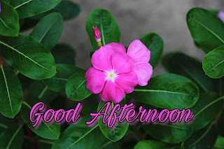 good-afternoon-images-for-WhatsApp শুভ-বিকালের-ছবি