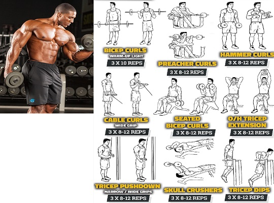 Best Weight Lifting for Arms
