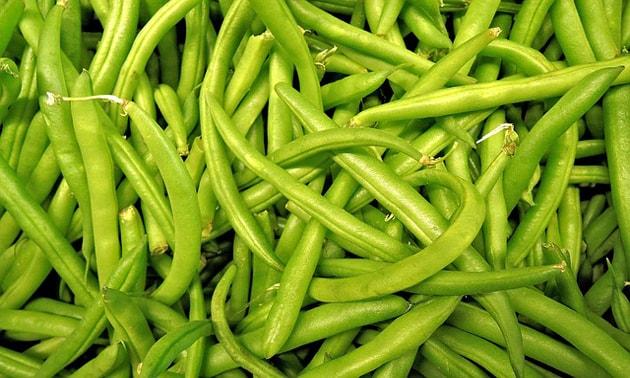 Feijão: (Phaseolus vulgaris L.)