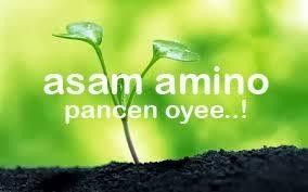 ASAM AMINO UNTUK TANAMAN