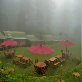 djungle, camping-puncak, djungle-puncak