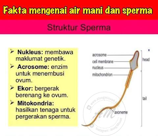 Fakta Mengenai Air Mani dan Sperma