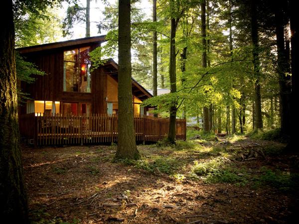 طبيعة لمنازل الغابات A+Golden+Oak+4+bedro