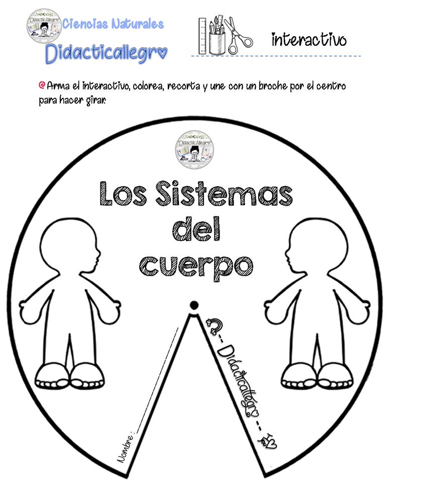 Excelente Fotografías De Los Sistemas Del Cuerpo Para Los Niños ...