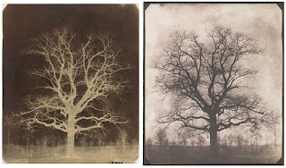 Calotype negative and salted paper print