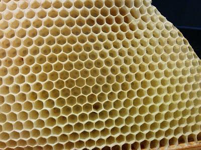 bijenwascellen