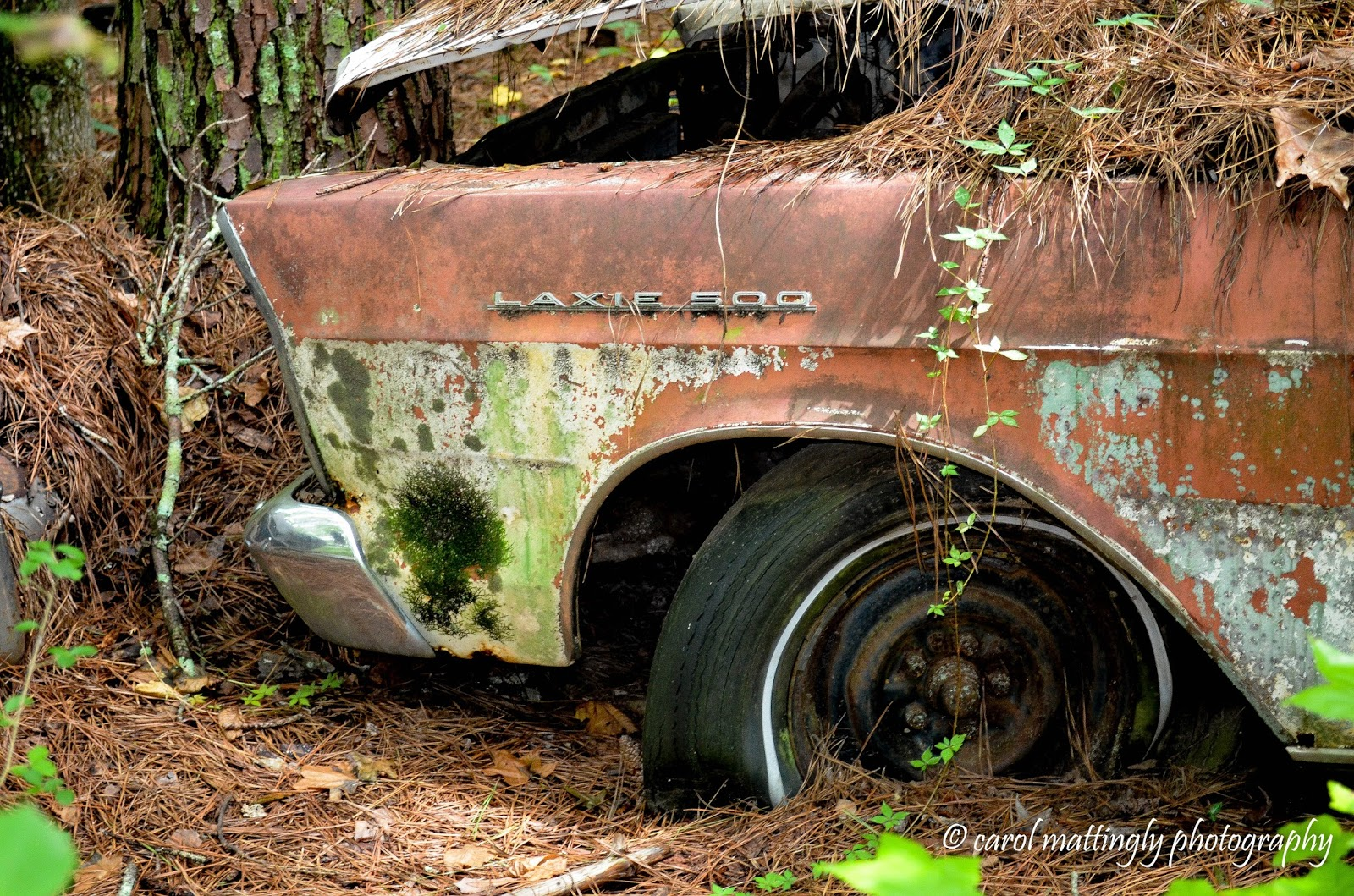 Carol Mattingly Photography: Waxing Nostalgic