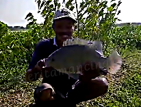 Mancing Ikan Mujair Monster Sampai Nyemplung