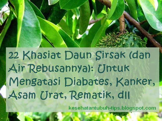 Tanaman sirsak yakni salah satu tumbuhan herbal yang setiap bagiannya bisa dimanfaatkan s Inilah 22 Khasiat Daun Sirsak (dan Air Rebusannya): Untuk Mengatasi Diabates, Kanker, Asam Urat, Rematik, dll