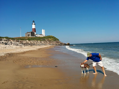 Beach Safety tips for pets