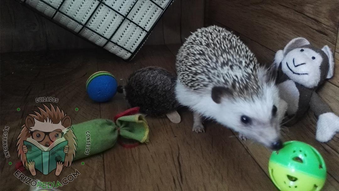 Foto de un erizo de tierra con juguetes