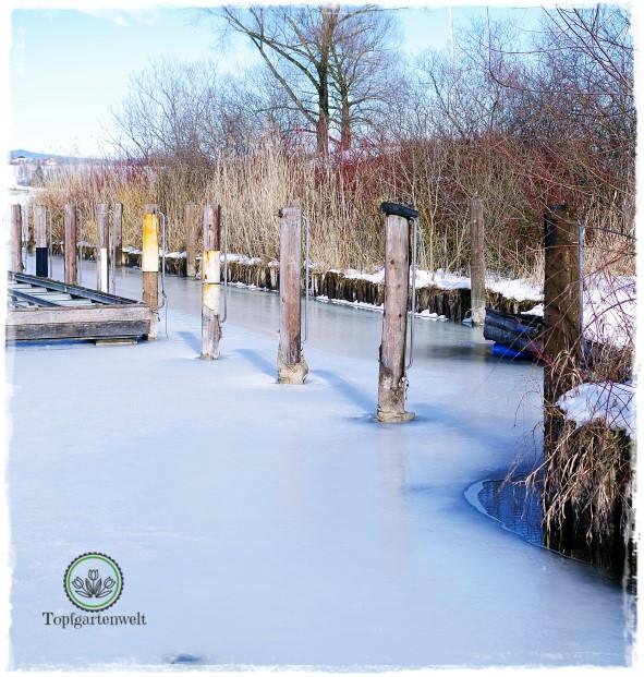 Gartenblog Topfgartewelt Wallersee: eine dicke Eisschicht beim Bootsplatz Kapeller