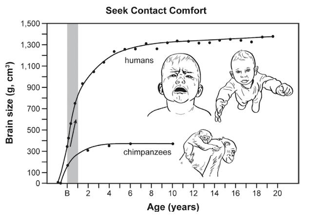 Lugares, contextos. — Cambios en la ontogenia de los Hominini